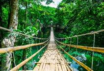 Baocicco 7x5ft Vinyl Green Forest Backdrop Photography Background Bamboo Pedestrian Suspension Bridge Over River Nature Landscape Outdoor Holiday Party Children Baby Adults Portraits Photo Studio