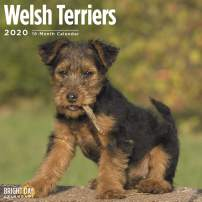 2020 Welsh Terriers Wall Calendar by Bright Day, 16 Month 12 x 12 Inch, Cute Dogs Puppy Animals Welshie WT Canine