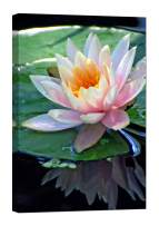 LightFairy Wall Art for Living Room - Glow in The Dark Canvas Painting - Stretched and Framed Giclee Print - Pink Lotus Flower Pond Marsh - Wall Decorations for Bedroom - 24 x 36 inch