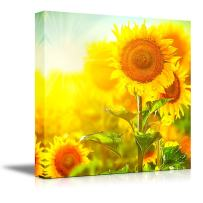 """Canvas Prints Wall Art - Beautiful Sunflowers Blooming on The Field Growing Sunflower   Modern Wall Decor/Home Decoration Stretched Gallery Canvas Wrap Giclee Print & Ready to Hang - 16"""" x 16"""""""