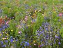 Nature's Seed Northwest Wildflower Blend, 500 sq. ft.