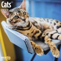 2020 Cats Wall Calendar by Bright Day, 16 Month 12 x 12 Inch, Cute Kitten Animals Feline