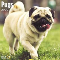 2020 Pugs Wall Calendar by Bright Day, 16 Month 12 x 12 Inch, Cute Dogs Puppy Animals Adorable Canine