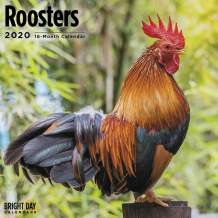 2020 Roosters Wall Calendar by Bright Day, 16 Month 12 x 12 Inch, Beautiful Farm Animals Chickens