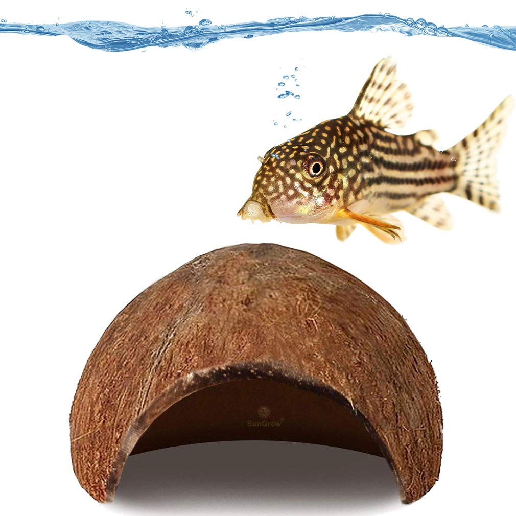 SunGrow Pleco Cave for Aquatic Pets & Bottom feeders, Made of Raw Coconut, Smooth Edged Comfortable Hide-Out, Perfect Breeding, Space for Pleco, Catfish and Other Pets
