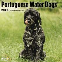 2020 Portugese Water Dogs Wall Calendar by Bright Day, 16 Month 12 x 12 Inch, Cute Dogs Puppy Animals Adorable Canine