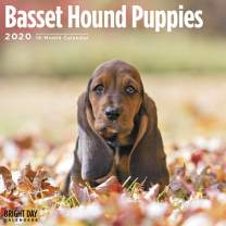 2020 Basset Hound Puppies Wall Calendar by Bright Day, 16 Month 12 x 12 Inch, Cute Dogs Animals Hunting Canine