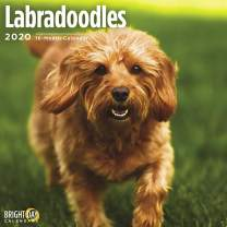 2020 Labradoodles Wall Calendar by Bright Day, 16 Month 12 x 12 Inch, Cute Dogs Puppy Animals Labrador Retriever Poodle Canine