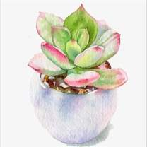 DIY Paint by Diamond Kits for Kids, Adults, Home Room Office Decoration. Gift Presents for Her Him Succulent Plants 11.8x11.8Inches