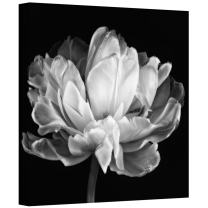 """ArtWall 'Tulipa Double Black and White II' Gallery Wrapped Canvas Art by Cora Niele, 18 by 18"""""""