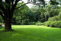 Sun & Shade Grass Blend (500 sq ft)