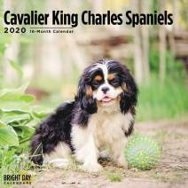 2020 Cavalier King Charles Spaniel Wall Calendar by Bright Day, 16 Month 12 x 12 Inch, Cute Dogs Puppy Animals Adroable Tricolor Ruby Chestnut