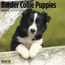 2020 Border Collie Puppies Wall Calendar by Bright Day, 16 Month 12 x 12 Inch, Cute Dogs Puppy Animals Coqetdale Redesdale Canine