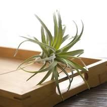 ChezMax Artificial Flocking Tillandsia Air Plants Pineapple Grass Faux Succulents Bromeliads Home Garden Decor 2Pcs 4#