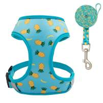 EXPAWLORER Dog Harness and Leash Set - Adjustable Soft Padded Puppy Vest Harness - Pineapple Sunflower Double-Sided Printed - for Small Dogs Cats