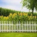 Baocicco 6x6ft Sunflower Garden Backdrop Green Spring Backdrop Green Grassland Backdrop White Fence Backdrop Wedding Backdrop Summer Holiday Backdrop Children Adults Photo Shooting Props Photo Booth