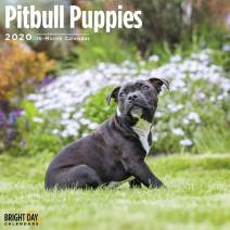 2020 Pit Bull Puppies Wall Calendar by Bright Day, 16 Month 12 x 12 Inch, Cute Dogs Puppy Animals Bully Police Search Rescue Canine