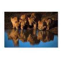 Lions Of Mara by Mario Moreno, 30x47-Inch Canvas Wall Art