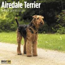 2020 Airdale Terriers Wall Calendar by Bright Day, 16 Month 12 x 12 Inch, Airedale Cute Dog Puppy Animals Bingley Waterside Canine