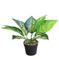 OTARTU Potted Fake Evergreen Plants Artificial Dieffenbachia Tropical Plants in Pot/Vase, Home Office Desk,Book Shelf Greenery Decor,Indoor and Outdoor Decoration (Dieffenbachia)