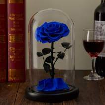 puto Preserved Real Rose Eternal Rose in Glass Dome Gift for Her Thanksgiving Christmas Valentine's Day Birthday Mother's Day (Blue, Large)