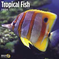 2020 Tropical Fish Wall Calendar by Bright Day, 16 Month 12 x 12 Inch, Exotic Animals Under The Sea