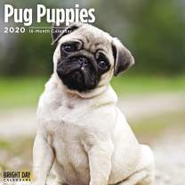 2020 Pug Puppies Wall Calendar by Bright Day, 16 Month 12 x 12 Inch, Cute Dogs Puppy Animals Adorable Canine