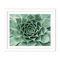 Humble Chic Framed Wall Decor - Fine Art Plants Picture Poster Prints in White Frame for Home Decorations Living Dining Room Bedroom Bathroom Office - Succulent Cactus Plant, 16x20 Horizontal