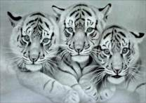 White Tigers Diamond Painting Art - PigBoss 5D Full Drill Diamond Embroidery Crystals Diamond Dots Kit Cross Stitch Art Gift for Adults (15.7 x 11.8 inches)
