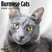 2020 Burmese Cats Wall Calendar by Bright Day, 16 Month 12 x 12 Inch, Cute Kitty Cat Animal Wong Mau Feline