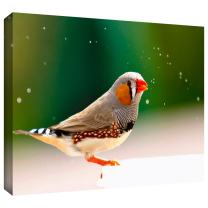 ArtWall Lindsey Janich 'Zebrafinch' Gallery-Wrapped Canvas Artwork, 12 by 14-Inch