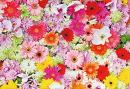 Baocicco Polyester 9x5ft Colorful Flowers Wall Photography Backdrop Background Wedding Ceremony Bridal Shower Honeymoon Anniversary Newborn Mother's Day Valentine's Day Photo Studio Video Props