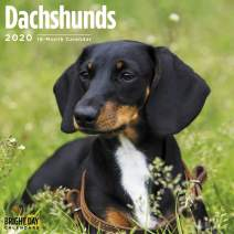 2020 Dachshunds Wall Calendar by Bright Day, 16 Month 12 x 12 Inch, Cute Dogs Puppy Animals Doxies Weiner Sausage Canine
