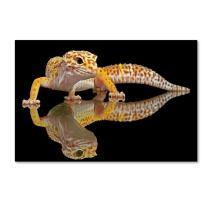 Leopard Gecko by Dikky Oesin, 22x32-Inch Canvas Wall Art