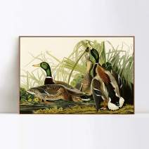 "INVIN ART Framed Canvas Giclee Print Mallard_Duck by John James Audubon Wall Art Living Room Home Office Decorations(Wood Color Slim Frame,24""x32"")"