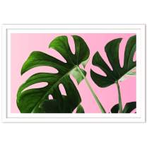 Humble Chic Framed Wall Decor - Fine Art Plants Picture Poster Prints in White Frame for Home Decorations Living Dining Room Bedroom Bathroom Office - Monstera Palm Plant Leaf, 24x36 Horizontal