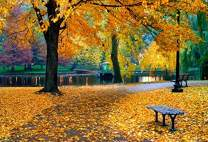 Baocicco 10x6.5ft Backdrop for Autumn Park Photography Background Yellow Autumn Fall Leaves Beautiful Natural Scenic Autumn Scenery Photo Backgrounds Studio Props Shoot Booth PhotoCall