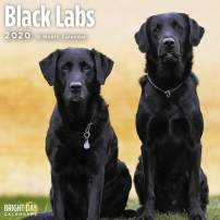 2020 Black Labs Wall Calendar by Bright Day, 16 Month 12 x 12 Inch, Cute Dogs Puppy Animals Labrador Retrievers Canines
