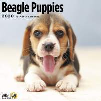2020 Beagle Puppies Wall Calendar by Bright Day, 16 Month 12 x 12 Inch, Cute Dogs Puppy Animals Hunting Canine
