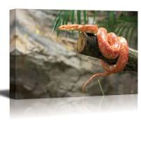 "Canvas Prints Wall Art - Closeup of a Corn Snake on a Branch | Modern Wall Decor/Home Decor Stretched Gallery Canvas Wrap Giclee Print & Ready to Hang - 24"" x 36"""