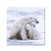 Polar Bear Cubs by The Macneil Studio, 18x18-Inch Canvas Wall Art