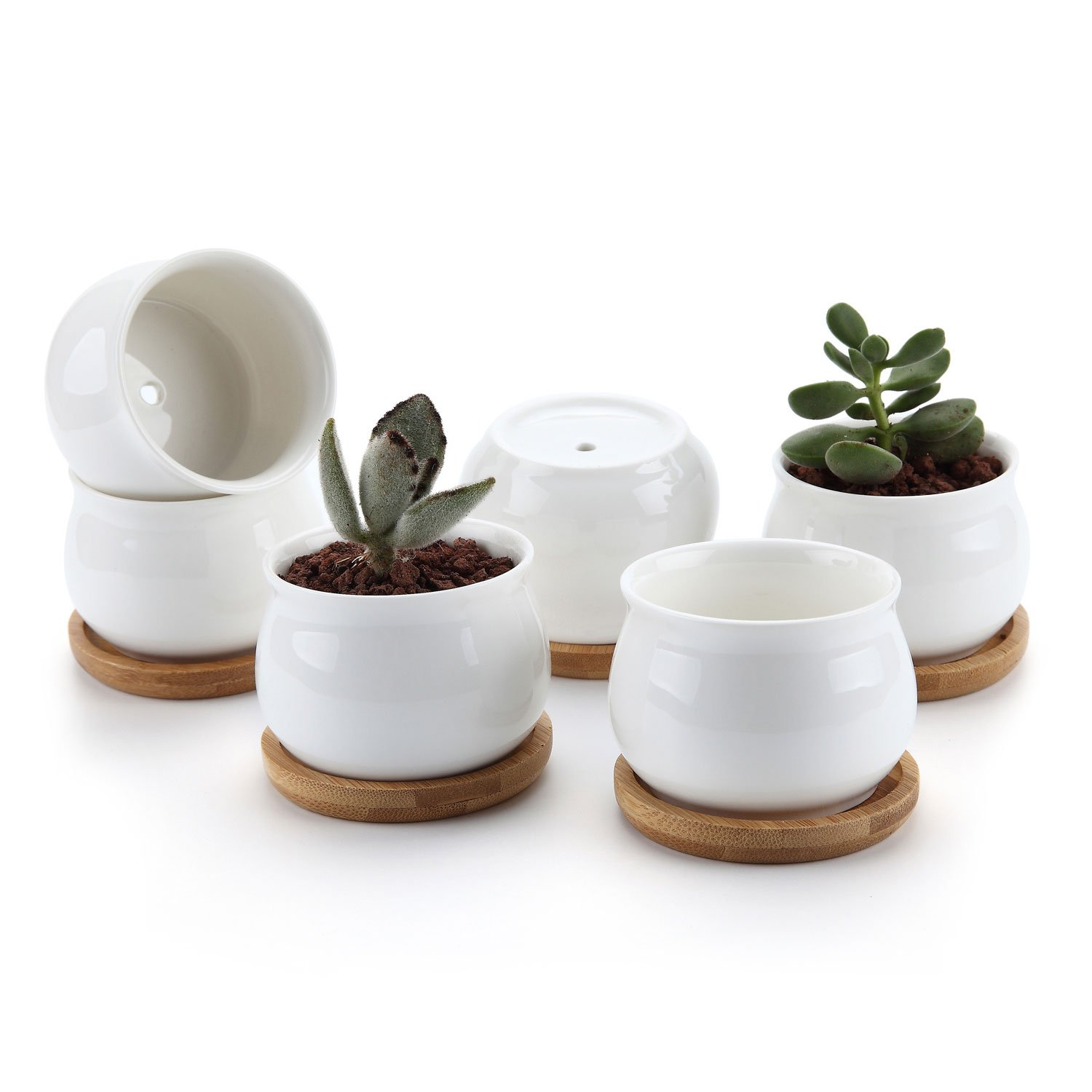 T4U Mini Succulent Pots White with Bamboo Trays - Ceramic Succulent Planters Indoor Jars with Drainage -Small Plant Cactus Holder Container Set of 6 - Home Office Desk Decoration Gift for Gardener