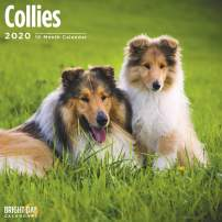 2020 Collies Wall Calendar by Bright Day, 16 Month 12 x 12 Inch, Cute Dogs Puppy Animals Adorable Lassie