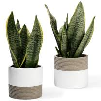 POTEY 054901 Cement Plant Pots for Small Plants Succulent Cactus - Concrete 5 Inch Planters Indoor with Drainage Holes(Set of 2, Plant NOT Included)