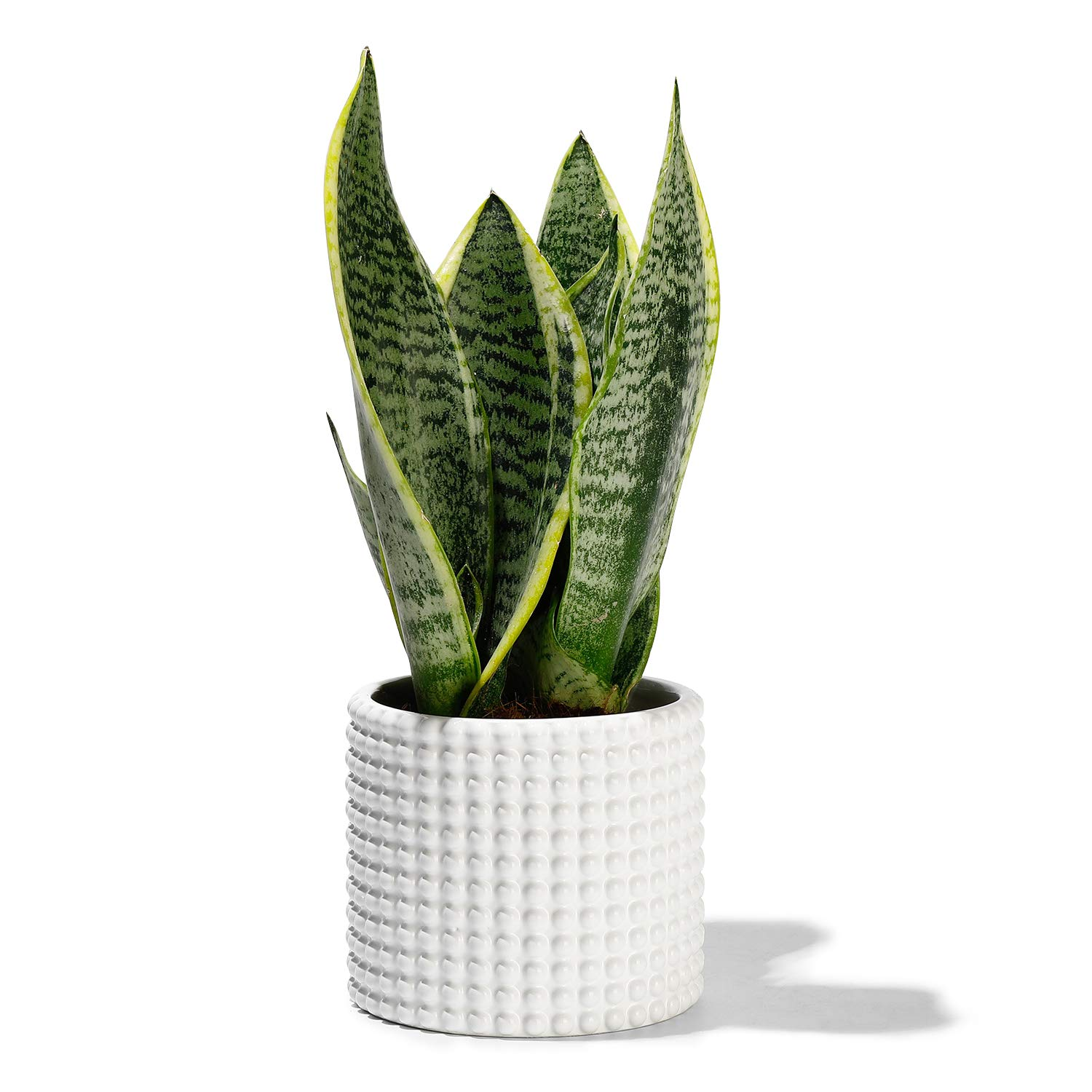 POTEY 055002 White Ceramic Vintage-Style Hobnail Textured Flower Planter Pots for Indoor Plants Flower Succulent with Drainage Hole(4.8 Inch D, Plant NOT Included)