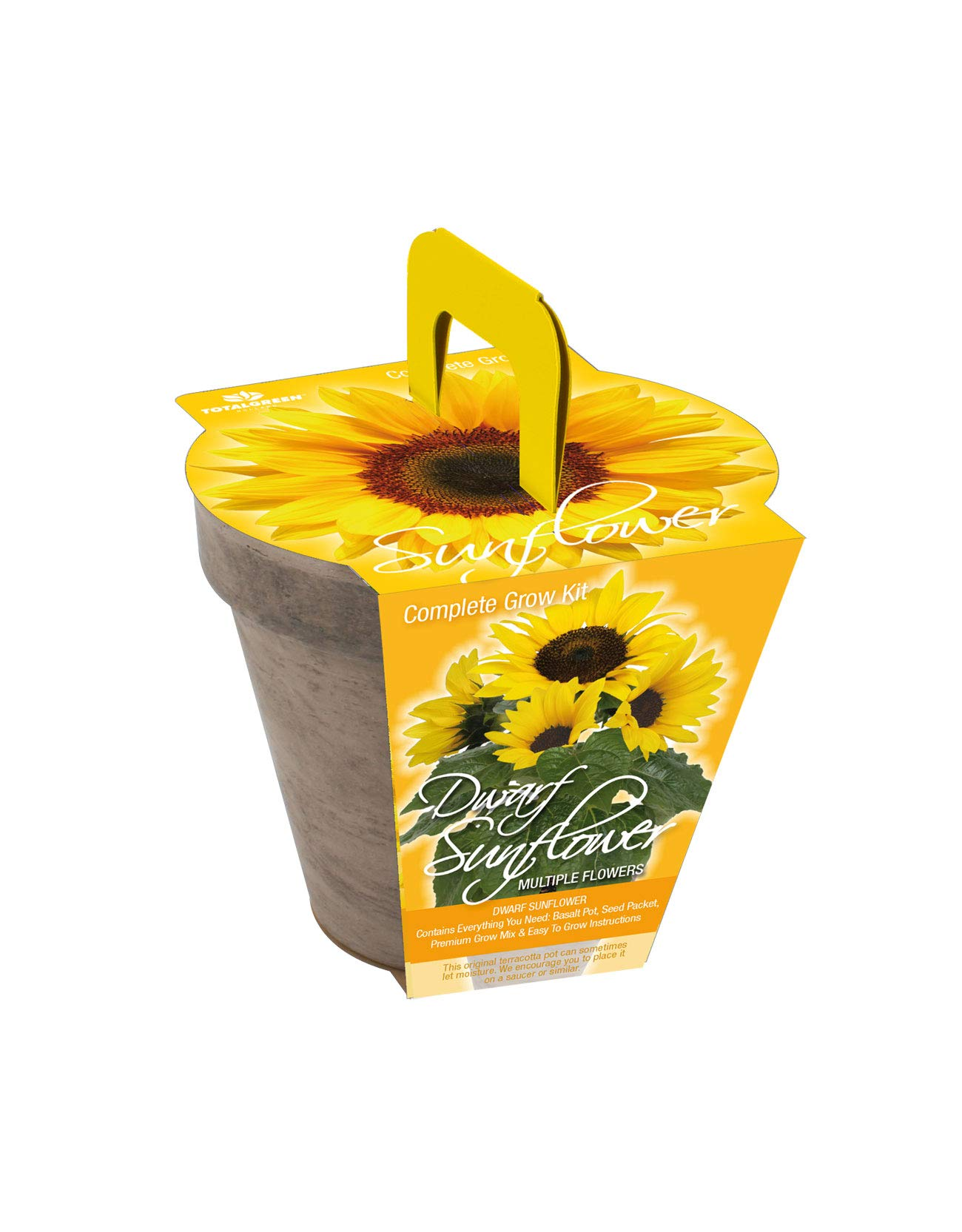 Quality Dwarf Size Sunflower Basalt Grow Kit by TotalGreen Holland   Stylish and Unique Germination Kit and Planter   Grow Your Own Mini Sunflowers from Seed Indoors with Easy Instructions