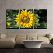 """wall26 - 3 Piece Canvas Wall Art - Closeup of The Sunflower with a Bee - Modern Home Decor Stretched and Framed Ready to Hang - 24""""x36""""x3 Panels"""