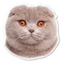 Scottish Fold Cat Magnet