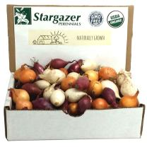 Stargazer Perennials Mixed Red, White and Yellow Onion Sets 8 oz | Organic Non-GMO Bulbs - Easy to Grow Onion Assortment