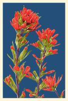 Indian Paintbrush - Letterpress (12x18 Art Print, Wall Decor Travel Poster)